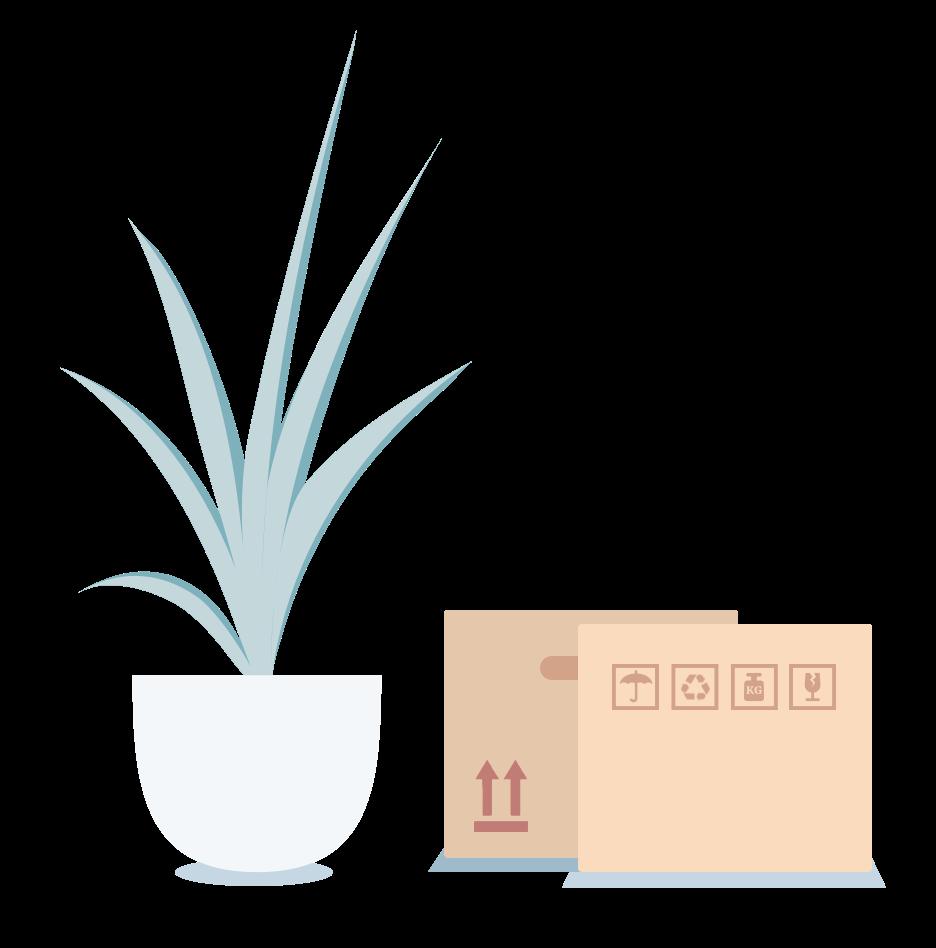 Plant+boxes